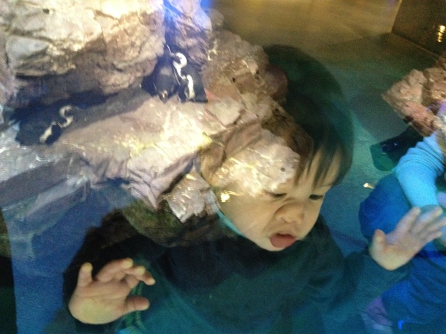 Baby really likes the penguins at the New England aquarium.
